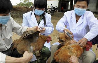 إعدام 94 ألف دجاجة في اليابان بعد تفشي أنفلونزا الطيور