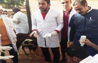 فحص وعلاج 745 حالة حيوانية ضمن فعاليات قوافل جامعة سوهاج البيطرية | صور