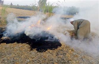الإحصاء : 2.1% نسبة القش التي تم حرقها من إجمالي كمية القش المنتجة 2019