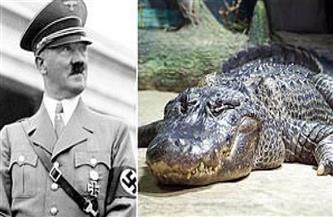 """نجا من قصف برلين.. عرض تمساح """"هتلر"""" فى متحف داروين بموسكو"""