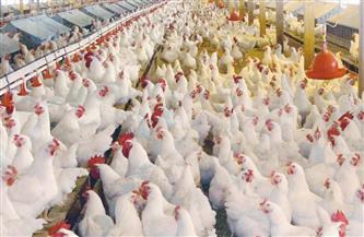 انخفاض أسعار الدواجن والكتاكيت البيضاءاليوم الإثنين 21-12-2020