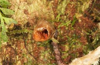 """زهرة أوركيد تحصل على لقب""""أقبح زهرة فى العالم"""".. تعرف على قائمة الاكتشافات النباتية فى 2020"""
