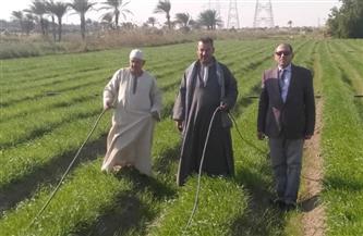 القصير: الزراعة على مصاطب بالري الحديث تسهم في زيادة الإنتاج وتخفيض التكاليف وترشيد المياه| صور