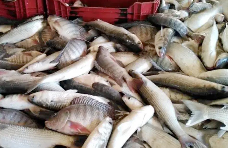 أسعار السمك اليوم الثلاثاء