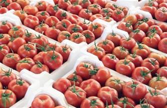 انخفاض الكوسة.. أسعار الخضراوات اليوم الأحد 9 مايو 2021