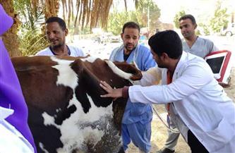 «بيطري الشرقية»: قافلة بيطرية بقرية طحا المرج بديرب نجم