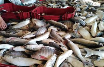 انخفاض البوري.. أسعار الأسماك اليوم الجمعة 26 فبراير 2021