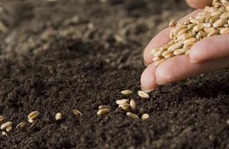مدير الإصلاح الزراعي بالشرقية: توفير التقاوي و16 ألف طن أسمدة بانتهاء الموسم الشتوي