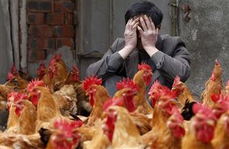 كوريا الجنوبية ترصد إصابة بإنفلونزا الطيور شديدة العدوى