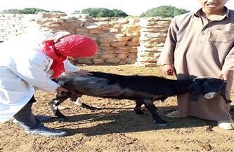 قافلة بيطرية لعلاج رؤوس الماشية والأغنام بقرى المثاني غرب مطروح | صور