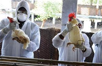 الزراعة الفرنسية: ارتفاع حالات الإصابة بإنفلونزا الطيور إلى 21 حالة