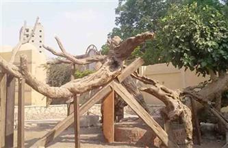 نائب محافظ القاهرة يتابع أعمال تطوير مزار شجرة مريم في المطرية