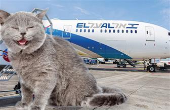 القطط الطائرة .. تهديد لرحلات الطيران الإسرائيلية