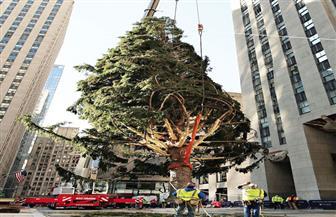 3 أشجار هزيلة فى كريسماس «كورونا»