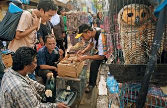 """بعد انتشار """"الكورونا"""".. طلب إحاطة حول إجراءات الوقاية بأسواق بيع الحيوانات"""