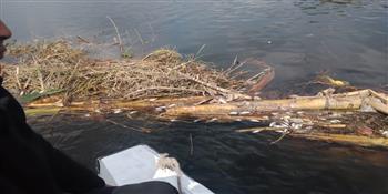 ضبط صياد تسبب في نفوق كمية كبيرة من الأسماك بمجرى نهر النيل ببنها