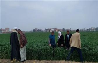 رئيسة الحملة القومية للقمح تتفقد الحقول الإرشادية بالقليوبية