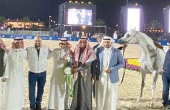 النتائج النهائية لبطولة كأس الخليج لجمال الخيل