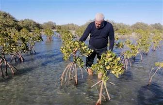 إطلاق أكبر مشروع لغابات المانجروف في البحر الأحمر لمواجهة مخاطر التغيرات المناخية