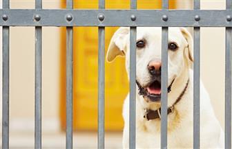 هونج كونج..وضع كلب في الحجر الصحي للاشتباه في إصابته بفيروس كورونا