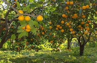 """""""متحدث الزراعة"""": مصر الأولى عالميا في تصدير الموالح وإنتاج زيتون المائدة والتمور والفراولة المجمدة"""