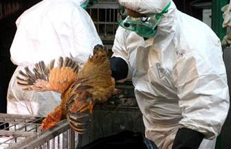 السعودية تبلغ عن تفشي سلالة إتش5 إن 8 من إنفلونزا الطيور في مزرعة