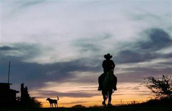 بتهمة غريبة.. أسترالي يذهب إلى المحكمة لاستخدامه الهاتف أثناء ركوب الحصان