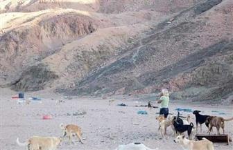 الكلاب الضالة بمدينة دهب تنهي حياة مربيتها الإنجليزية