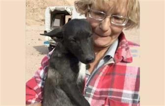 تعرف على قرار نيابة جنوب سيناء بشأن حادث مصرع مربية الكلاب الضالة في دهب