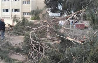 رياح شديدة وسقوط أشجار فى الغربية بسبب سوء الأحوال الجوية