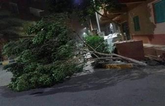 عاصفة ترابية تضرب مدينة سفاجا.. ورئيسة المدنية تطالب المواطنين الإبتعاد عن أعمدة الإنارة | صور