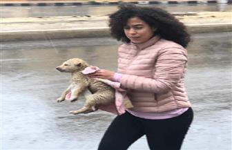 إيجابية المصريين vs التنين.. الرحمة..الإيمان.. الجدعنة أبرز حكايات المصريين| صور