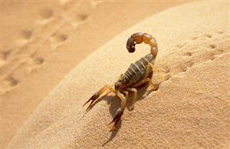 صدق أو لا تصدق.. بروتين لدغات الثعابين والعقارب لعلاج التهاب المفاصل