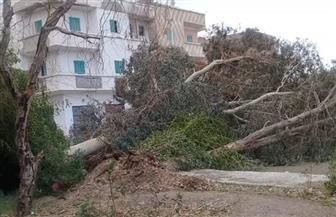 مدينة سفاجا تبدأ رفع آثار الأمطار والعاصفة الترابية |  صور