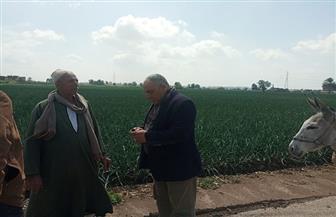 «وكيل زراعة الغربية» يتفقد الأراضي الزراعية للوقوف على مدى تأثير الأمطار على المحاصيل | صور
