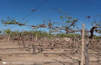 مدير زراعة جنوب سيناء: 141 فدان زراعات أتلفتها السيول برأس سدر والطور| صور