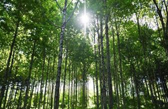 """""""الغابات والتنوع الحيوي"""".. شعار اليوم العالمي للغابات 2020"""