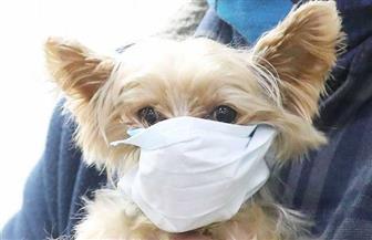 نفوق أول كلب أصيب بكورونا