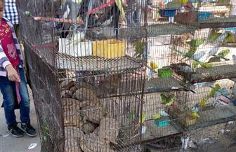 منع إقامة سوقي الخميس والجمعة في السيدة عائشة بسبب كورونا
