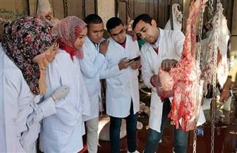 طلاب الطب البيطري بجامعة سوهاج يتدربون عمليا بالمجزر العمومي| صور