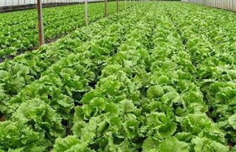 نقابة الفلاحين تشيد بإصدار الرئيس لقانون الزراعة العضوية