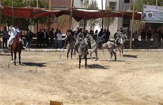ختام فعاليات مهرجان الفروسية بجنوب الوادي | صور