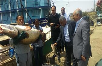الزراعة تتابع أعمال صيد الأسماك بمحافظة أسوان | صور