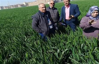 زراعة سوهاج : 170 حقلا إرشاديا للمزارعين والمرور الدوري على محصول القمح الاستراتيجي |صور