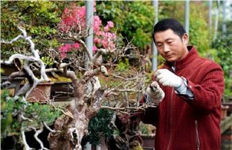 مزارعو الزهور يتحدون كورونا ويواصلون عملهم في موطن الزهور والأشجار بالصين   صور