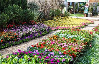 """""""الزراعة"""": 223 عارضًا يشاركون في معرض زهور الربيع هذا العام"""