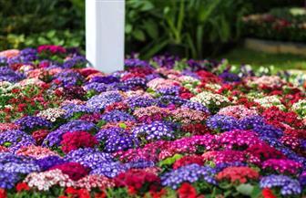 وزير الزراعة يتابع الاستعداد لافتتاح معرض زهور الربيع بحديقة الأورمان