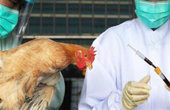 وسط مآسي كورونا.. أخطر سلالات إنفلونزا الطيور تضرب في أمريكا