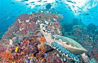 شعاب مرجانية مصنوعة بطريقة الطباعة المجسمة لحماية أنظمة البيئة البحرية