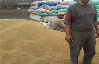 شون وصوامع سوهاج تستقبل المزارعين لتوريد محصول القمح